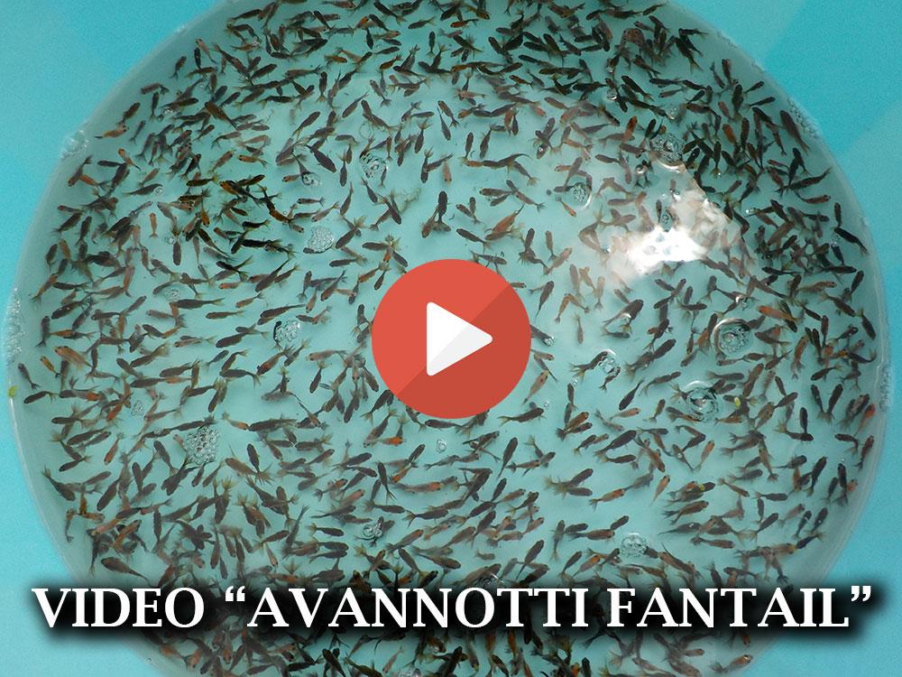 Allevamento pesci for Vasche esterne per pesci rossi