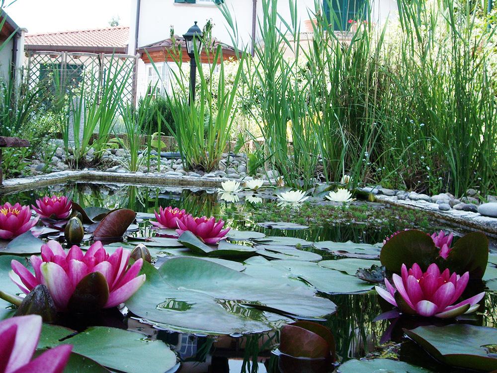 Allevamento pesci rossi e carpe koi piante acquatiche for Pesci laghetto vendita