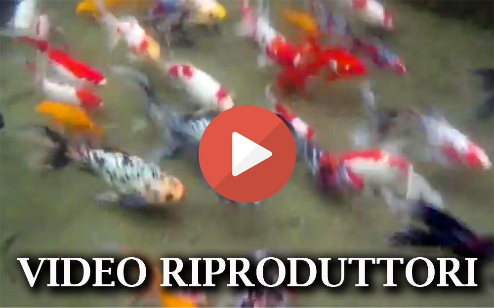 Allevamento pesci for Allevamento pesci