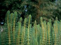 Allevamento pesci rossi e carpe koi piante fitodepuranti for Teli per stagni